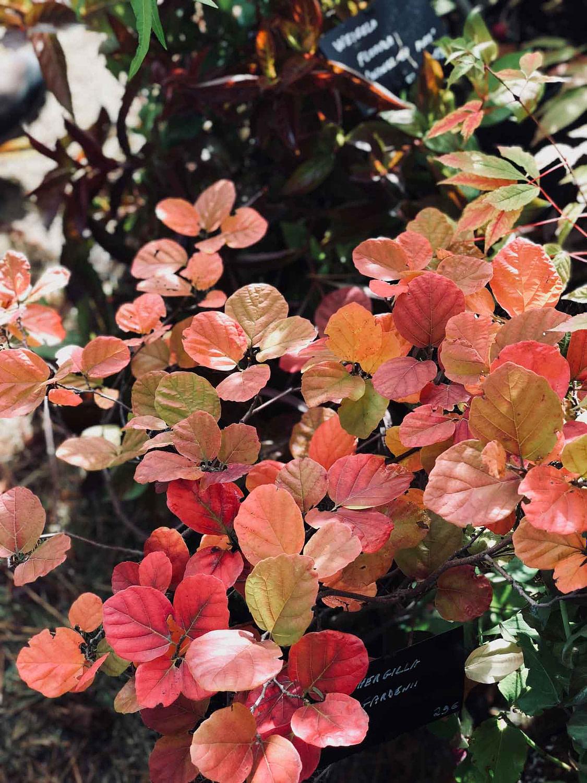 saint-jean-de-beauregard-fete-plantes-automne
