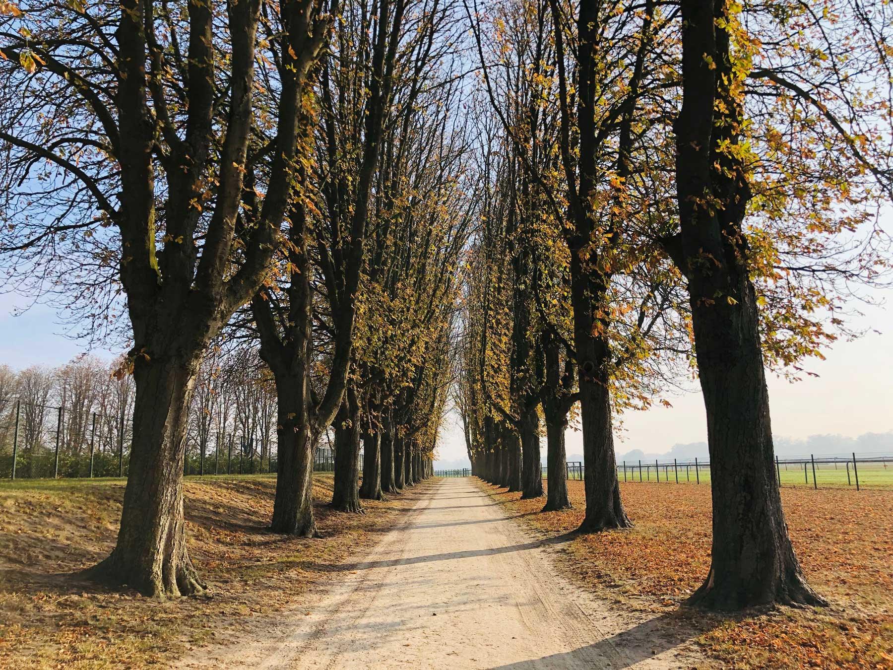 autumn-french-landscape-3