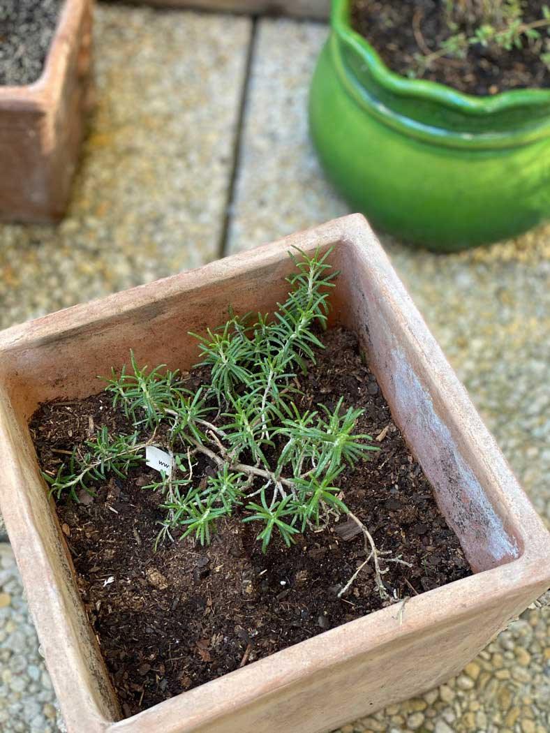herbes-aromatiques-une-bonne-maison-1050