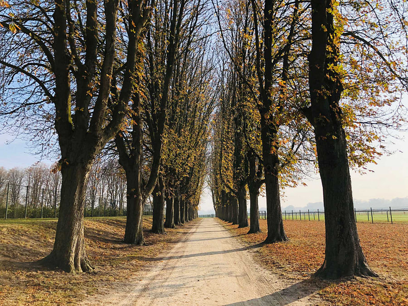 autumn-french-landscape-3