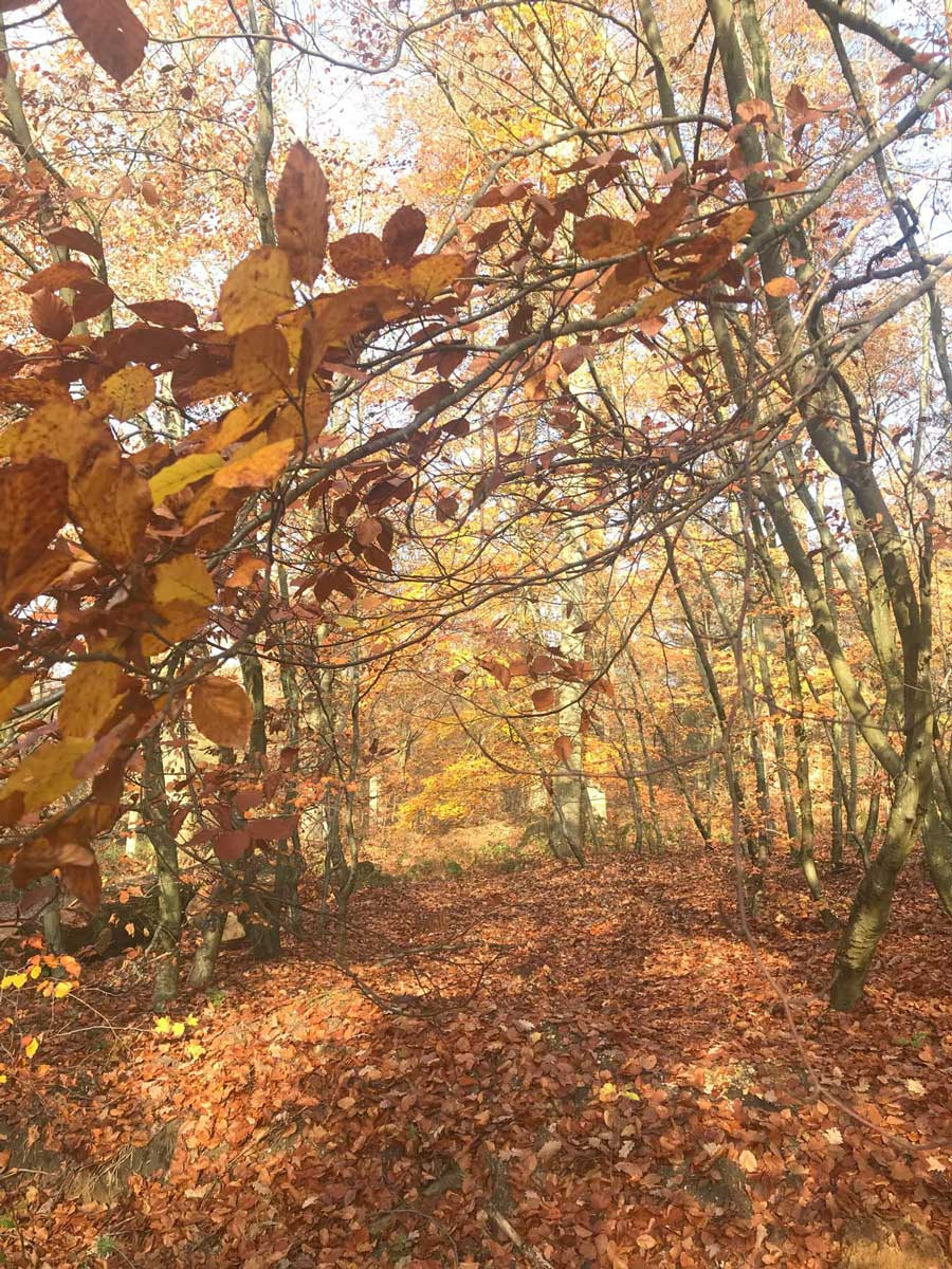 automne-campagne-francaise-chemin