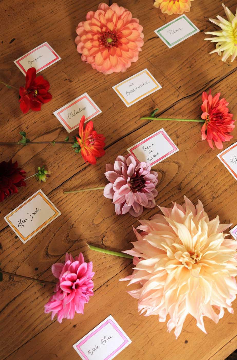 tuto-bouquet-dahlias-varietes-5