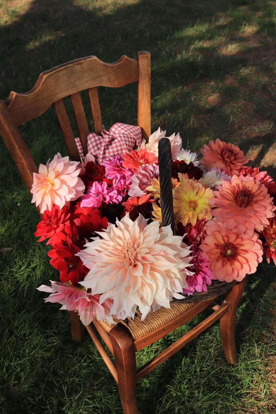 dahlias-fleurs-tuto-une-bonne-maison-02