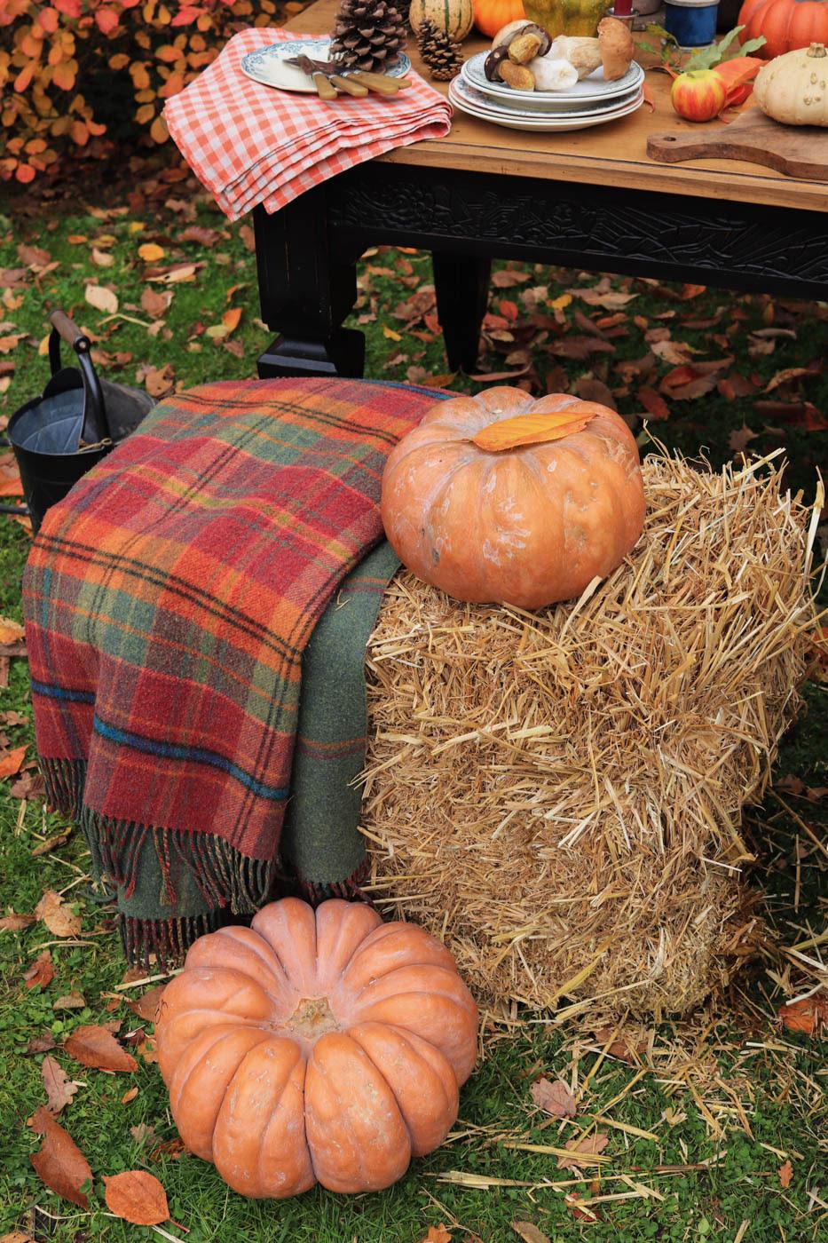 table-de-ferme-automne-decor-fall-farm-citrouilles